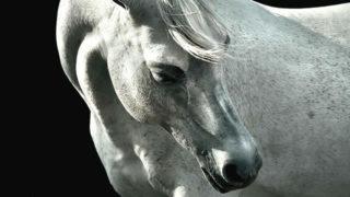 productos veterinarios para equino