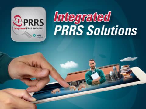 Solución PRRS - Síndrome respiratorio y reproductivo porcino