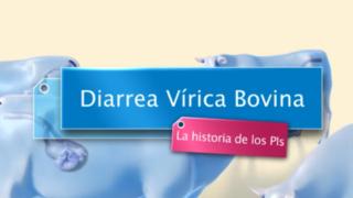 diarrea-virica-bovina